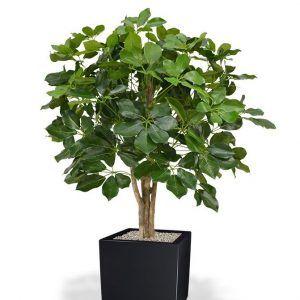 Plante pour bureaux